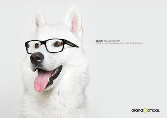 near Sightedness dog