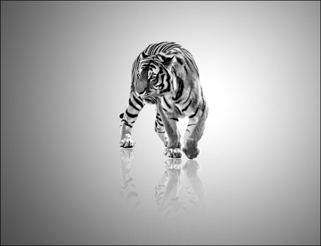 Tiger__black_and_white