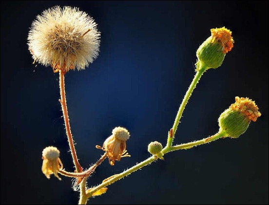 backlit-weeds