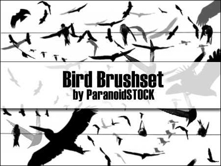 bird-brush-set