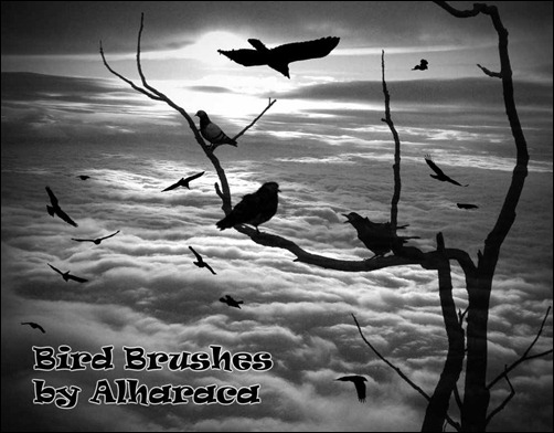 bird-brushes[9]