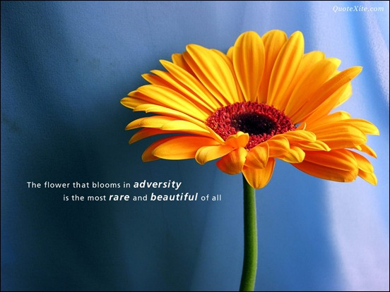 the-flower-that-blooms-in-adversity-is-the-most-beautiful-of-all