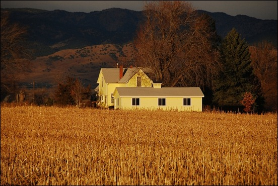 between-corn-and-mountains-