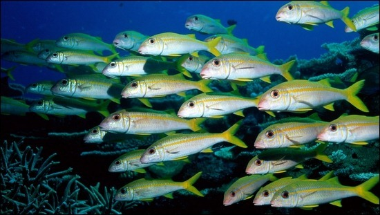 groups-of-fish