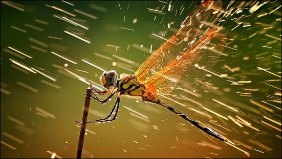 dragonfly-and-water-macro