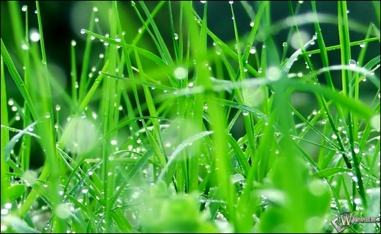 hd-picture-droplets-of-rain-on-the-grass