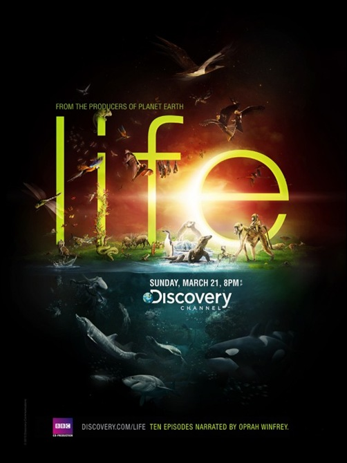 Discovery_Channel___Life_by_he1z-600x749