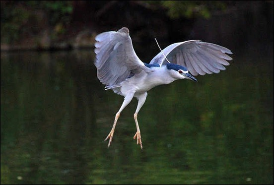 bird-in-flight-photos