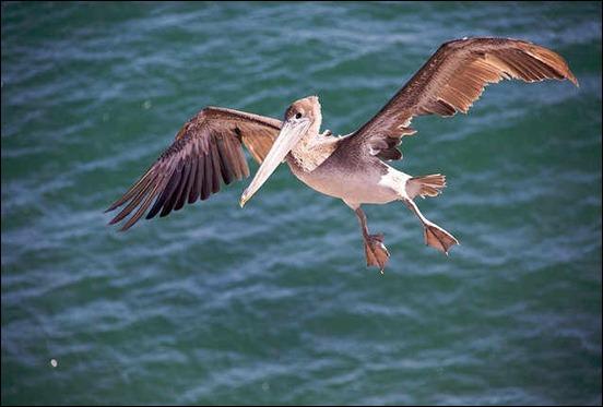 bird-in-flight[1]