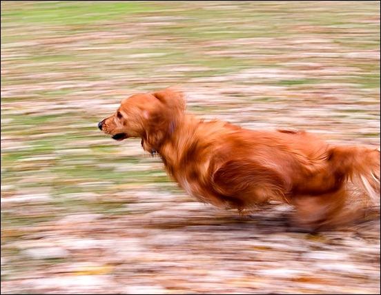 blur-motion-photography[3]