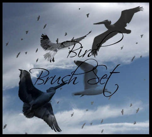 bird-brush-pack