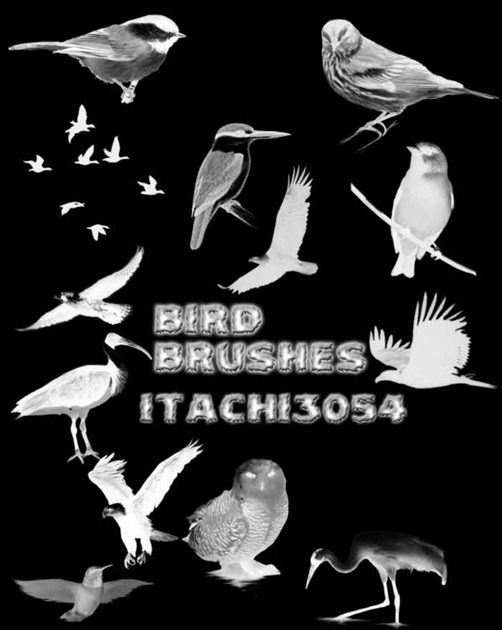 bird-brushes[13]