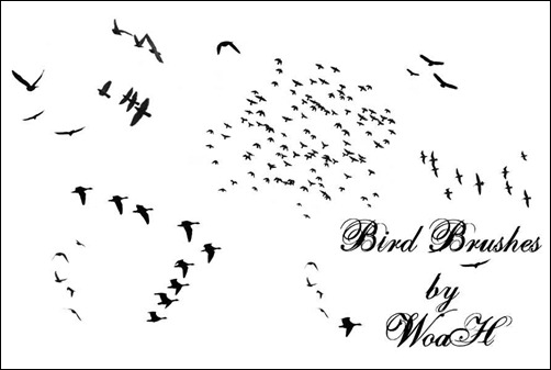 flying-bird-brushes