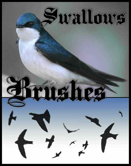 swallows-brushes