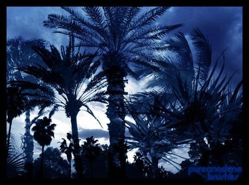 palm-tree-brush-set