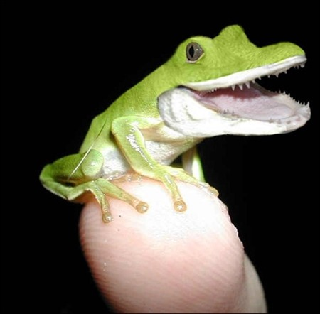 alli-frog