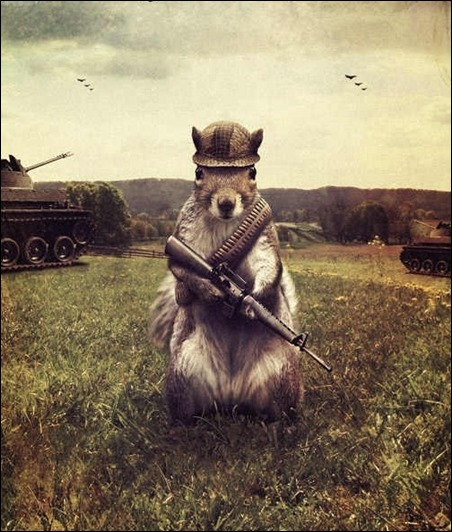 army-squirrel