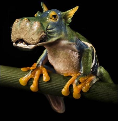 hippofrog[3]
