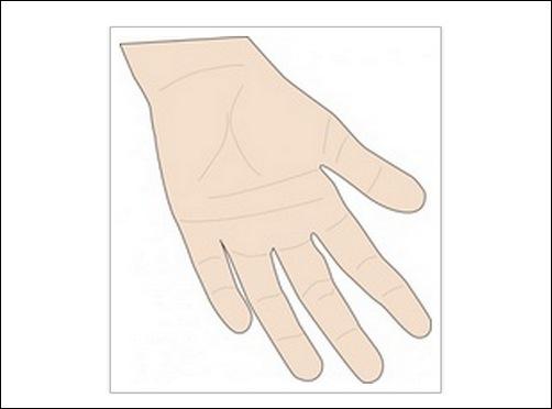 hand-vector-palm-clip-art