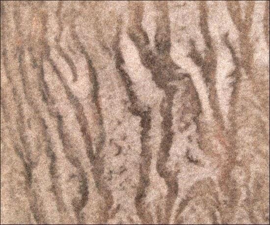 ZebraBeigeTexture